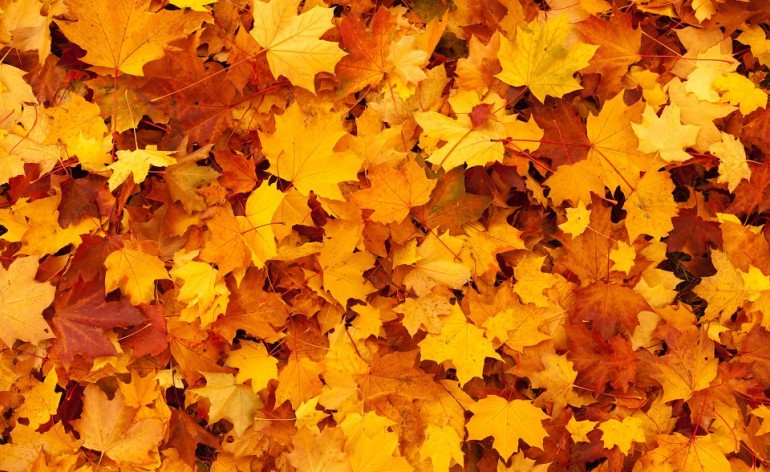 Outono