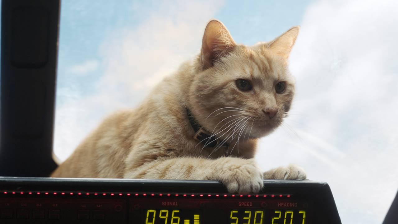 Goose, o gato da Capitã Marvel