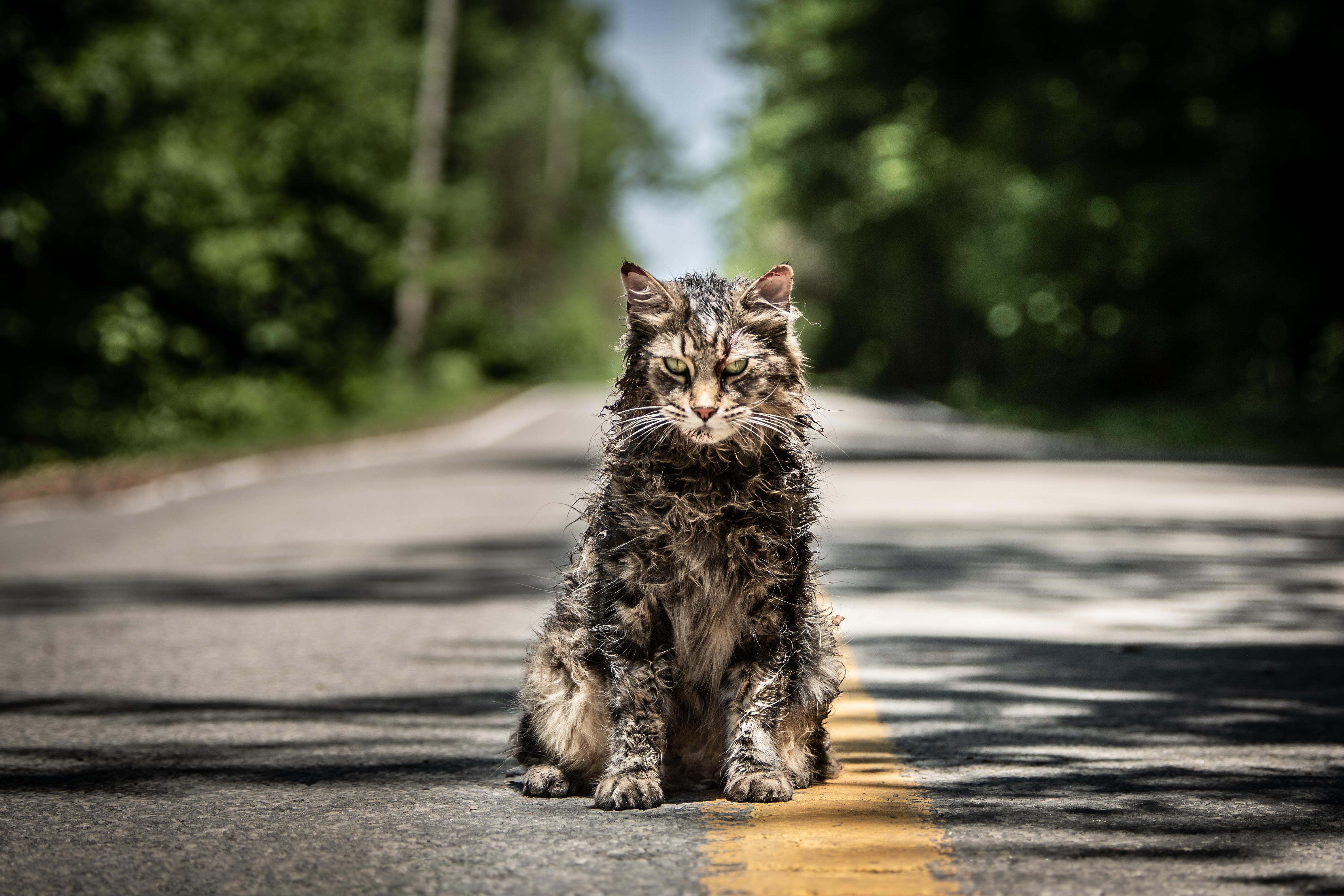"""Em nova cena de """"Cemitério Maldito"""", gato da família reaparece misteriosamente"""